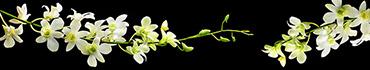 Скинали - Веточки белой орхедеи