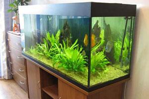 Тумба под аквариум - 1
